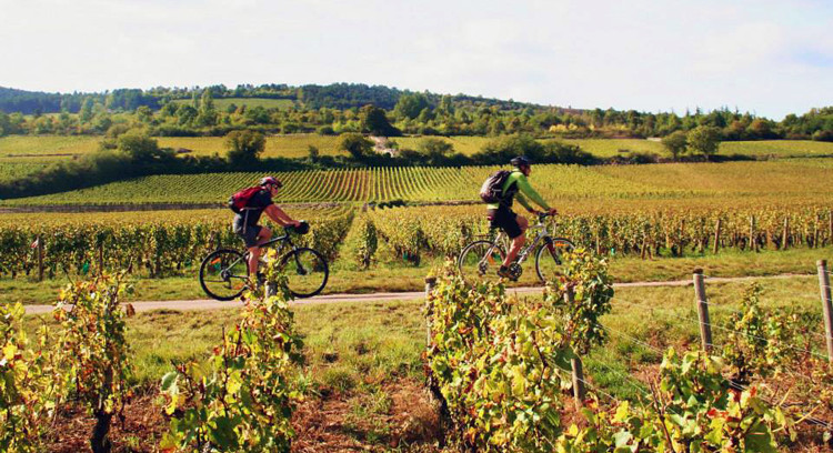 Burgundy-2 cyclists